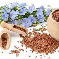 Flax (Linum usitatissimum)
