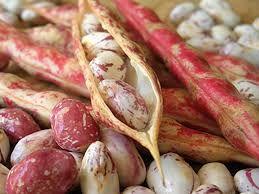 Kidney Beans (Phaseolus vulgaris)