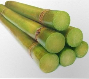 Sugarcane (Saccarum officinarum)