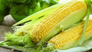 Sweet Corn (zea mays convar)