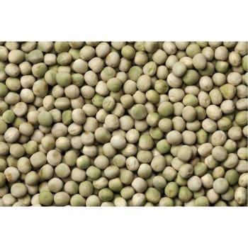 Fodder peas(pisum sativum L)